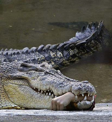 PASTOR GETS EATEN BY CROCODILE DURING BAPTISM